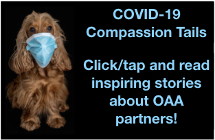 Brown shaggy dog wearing blue face mask and text COVID-19 Compassion Tails
