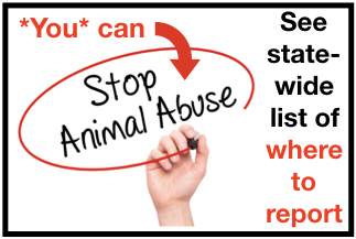 Handwritten Stop Animal Abuse sign
